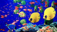 Marine Animals Quiz